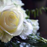 石鹸彫刻 ソープカービング バラの彫り方
