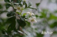 カービング☆☆ 生活に彩りを-ジャスミン